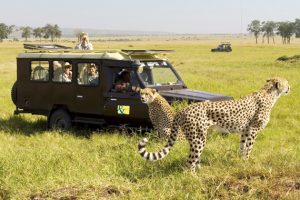 Side Safari Tours
