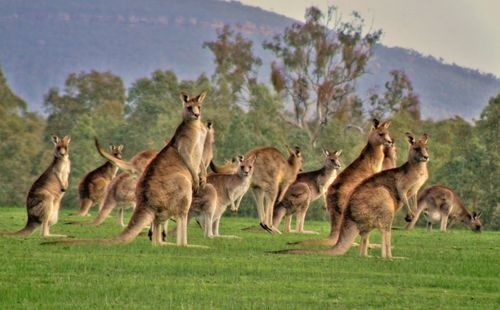 Are You Planning For An Australian Trip?